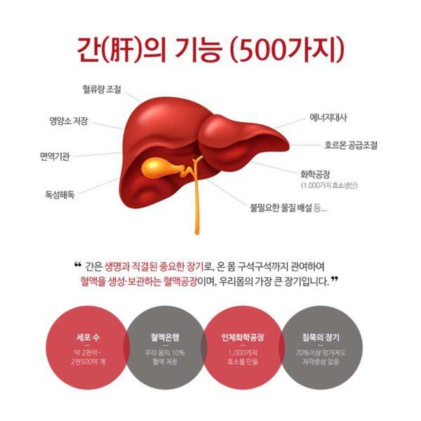 Công dụng của Bổ Gan Potent Liverkhan Hàn Quốc