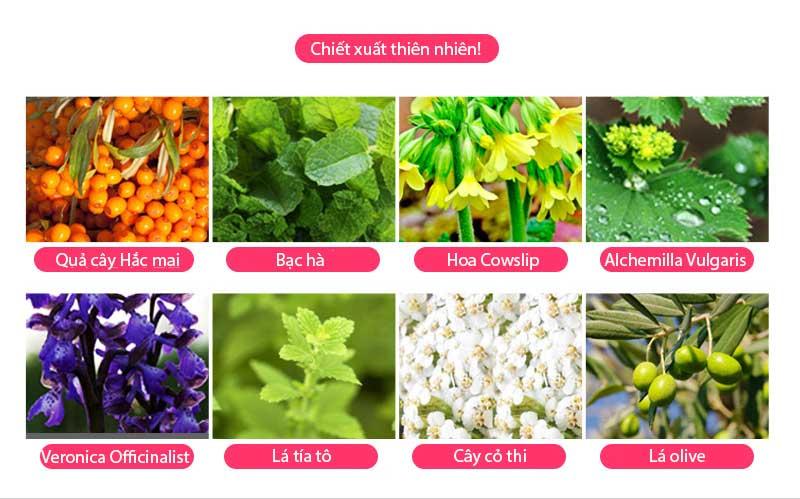 Thành phần của Kem dưỡng trắng da White Angel Skinaz PH 5.5 Hàn Quốc